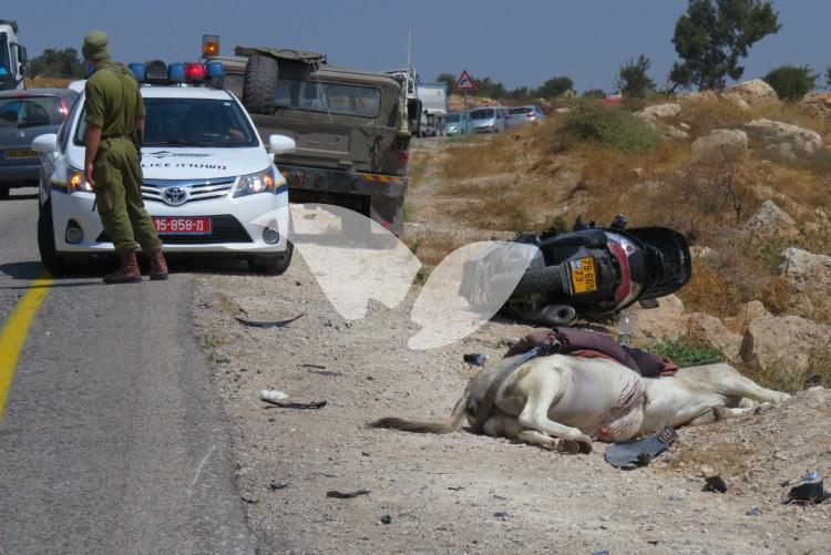 Scene of Accident Between Motorcyclist and Palestinian Riding a Donkey on Alon Road 10.8.16