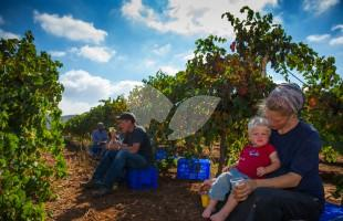 HaYovel Volunteers Take a Break in the Vineyard