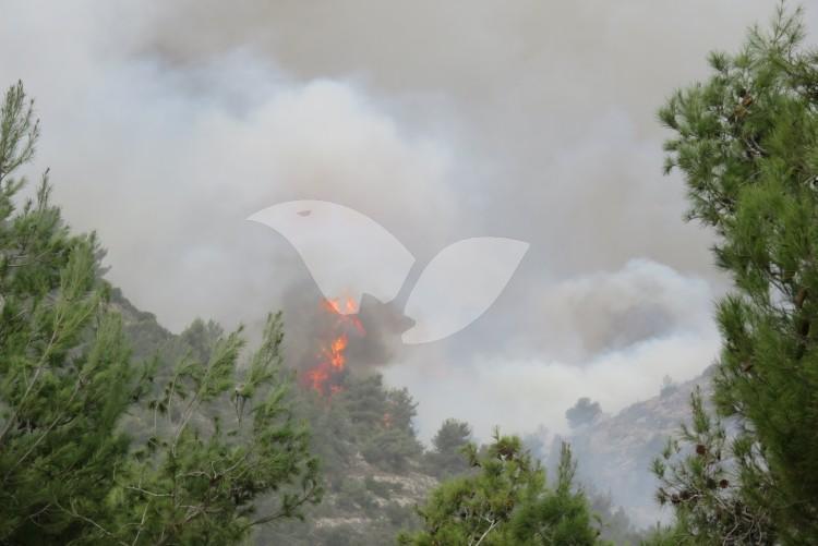 Forest Fire Near the community of Nataf, near Jerusalem