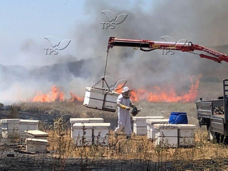 שריפת כוורות בעוטף עזה עקב ההצתות