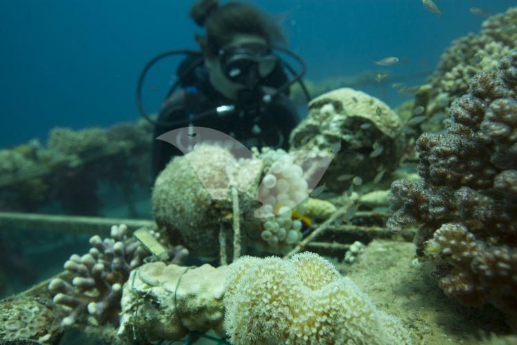 Coral Reefs in the Gulf of Eilat (Gulf of Aqaba)