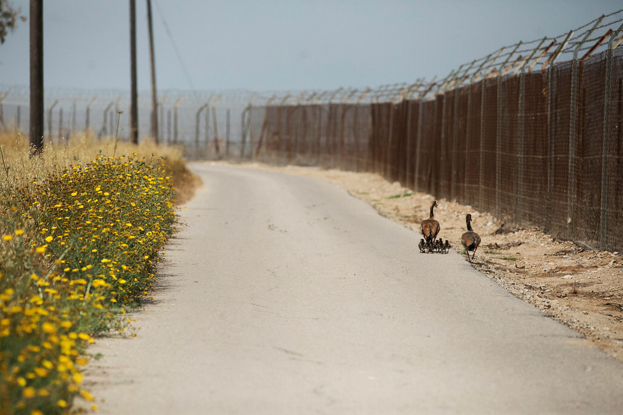 Alertness on the border of Gaza and Israel