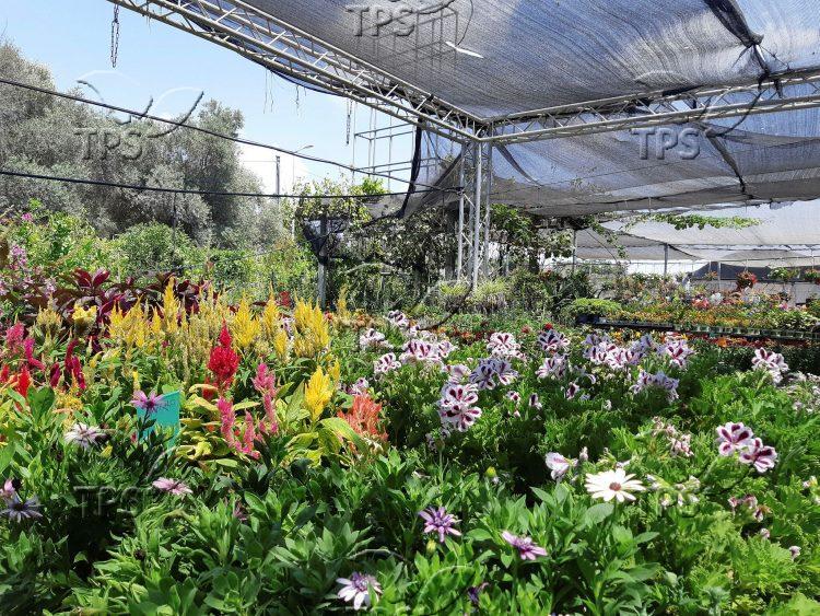 Colorful flowers in Israel