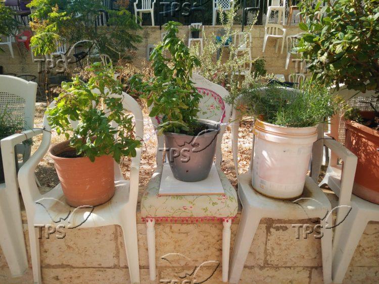 Saba Moti Chair Garden
