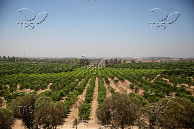 Agriculture at Gaza Envelope
